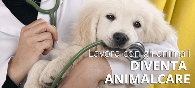 lavorare con gli animali, corsi animal care, diventare educatore cinofilo, toelettatore